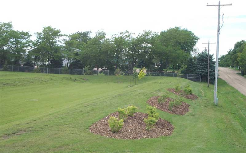 Picture of a yard with newly planted trees