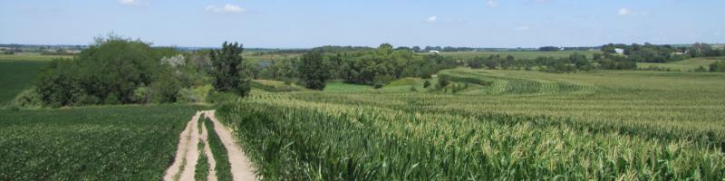 Field in LCNRD