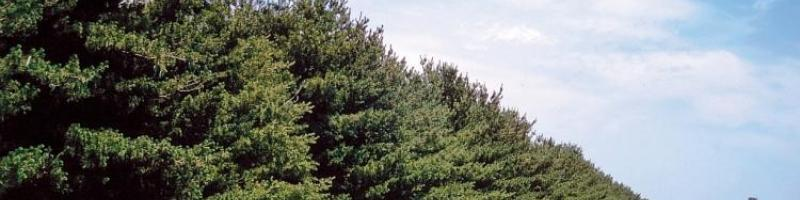 Conservation Trees