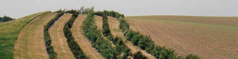 2020 Tree Planting