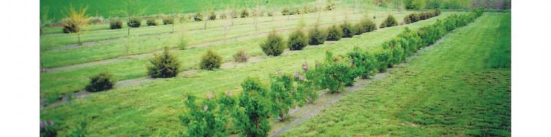 tree belt clip art